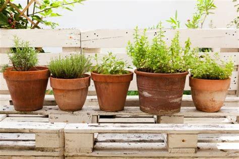 come coltivare in casa senza lade come coltivare il timo non sprecare