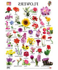 Flower names we need fun within flowers name in english jpg