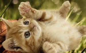 Playful-<strong>Kitten</strong>-<strong>kittens</strong>-16155935-1280-800.jpg