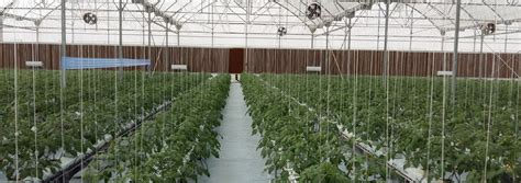 membuat green house hidroponik hidroponik greenhouse dan bercocok tanam hidroponik