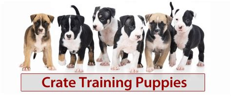crate a puppy overnight tips on crate puppies overnight puppy house 101 biting