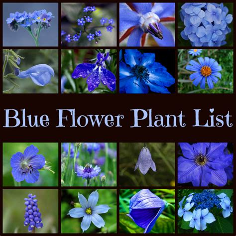 Blue Flowering Plants Www Pixshark Com Images Blue Garden Flower