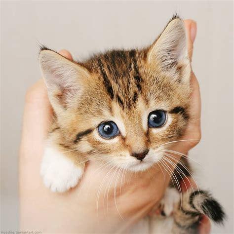 alimentazione gatti svezzamento gattini allattamento e alimentazione