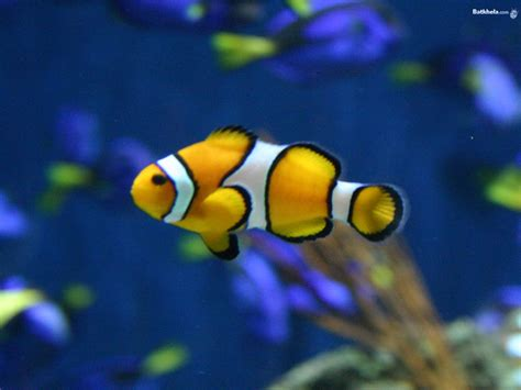 what color are fish underwater world wallpapers hd pictures one hd wallpaper