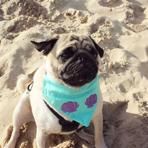 pug mermaid 17 best images about costumes on diy costumes costumes and