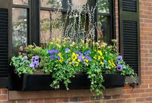 Variety of flowers and plants growing in a window box jorge salcedo