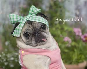 Clara-the-<strong>pug</strong>-Beautiful-<strong>Pug</strong>-Mug-by-<strong>pugs</strong>-and-kisses3-1024x819.jpg