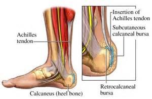 Achilles Tendon Tear Physical Therapy » Home Design 2017