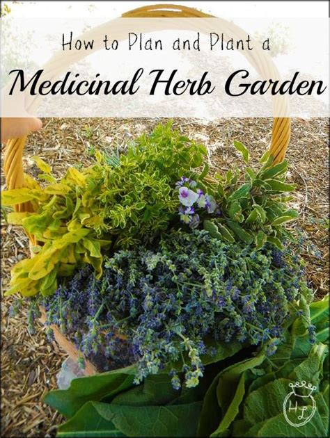 how to grow a herb garden 1000 ideas about diy herb garden on pinterest herbs