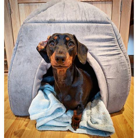 igloo dog houses for large dogs large dog igloo bed korrectkritterscom