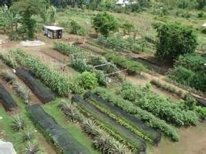 Organic Gardening Do Not Look Any Further For Organic Gardening Advice