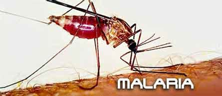 L Malaria by Malaria Kibera Uk