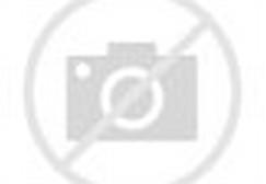 Rumah Minimalis Modern 1 Lantai
