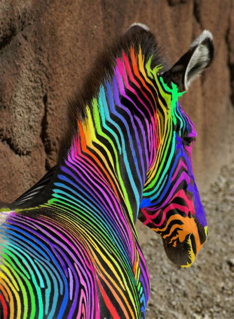 An Extreemely Rare Rainbow Zebra 171 Cry Havoc And Let S Colorful Animal