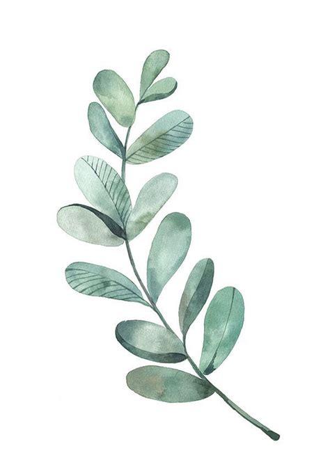 картинки по запросу eucalyptus leaves png wall pics