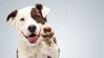 Dogs For Adoption How To Adopt A For Free