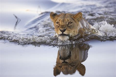 it s hd animals funny wallpapers amazing pictures of nature it s hd animals funny wallpapers amazing pictures of