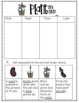 biography lesson plan for 2nd grade plant life cycle life cycle of a plant quot freebie quot differentiated lesson for