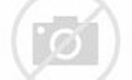 Purple Hummingbird and Flower