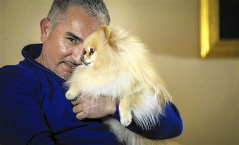 whisperer cesar millan whisperer cesar millan on why americans so many problems with their dogs