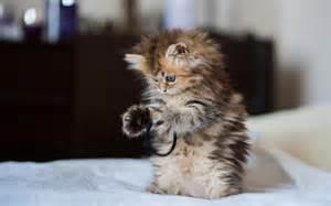 cute-kitty-playing.jpg