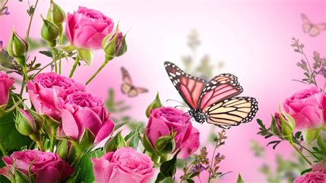 Any Design Of Flowers butterfly with flowers wallpapers on wallpaperget com