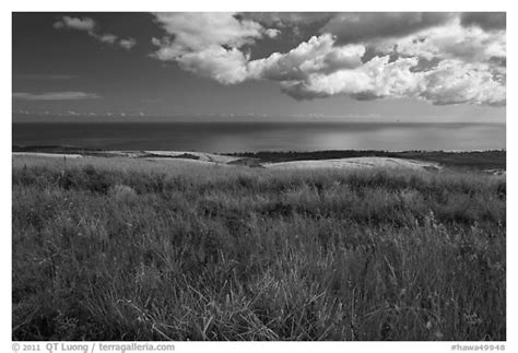 Hawa Acean Colour black and white picture photo grasses and kauai