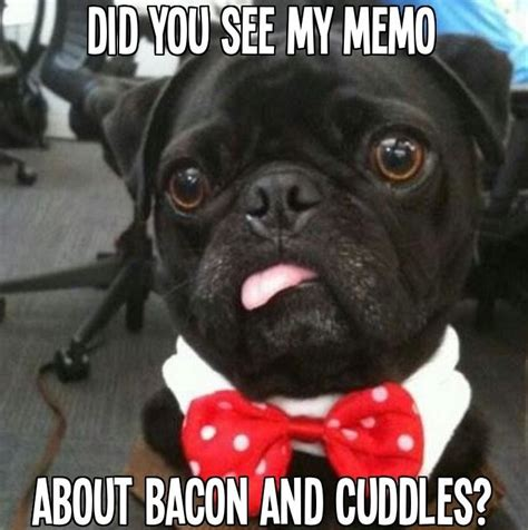 what causes seizures in pugs 1000 images about pugs on pug pugs and the pug