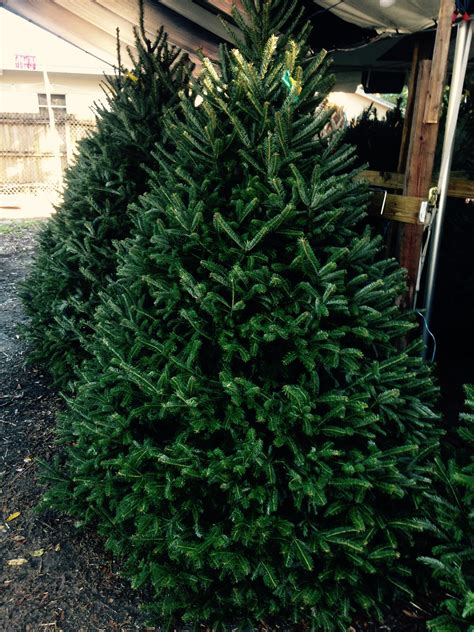 28 best christmas tree lot near me dave s christmas