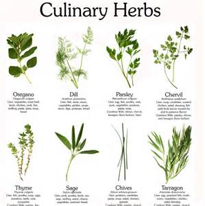 the magic of herbs lass vogue