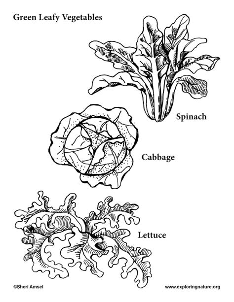 vegetables coloring pages pdf garden vegetables coloring pages 10