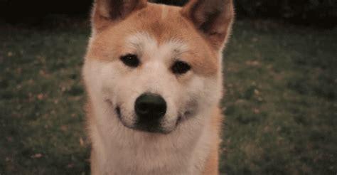 puppy tilt so a blind walks into a bar jokes