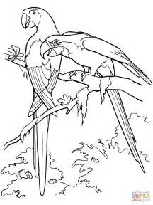 Scarlet Macaw Coloring Page scarlet macaws coloring page free printable coloring pages