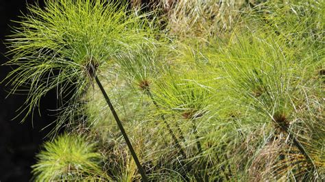 Vertikutieren Im Oktober by Rasen Kalken Zeitpunkt Rasen Kalken Zeitpunkt Rasenpflege