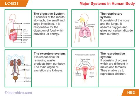 grade 5 human worksheets learnhive icse grade 5 science the human lessons exercises and practice tests
