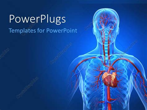 powerpoint templates urinary system powerpoint template a human anatomy with bluish