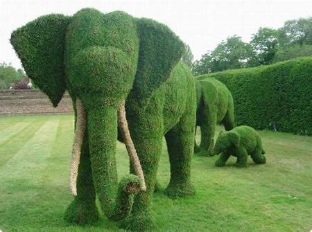 elephant topiary a topiary elephant a living outdoor sculpture