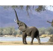 The Elephants Trunk  Science In Our World Certainty &amp Controversy