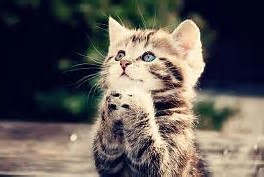 Gambar kucing lucu dan unik Imut imut Terbaru 2013 - Gambat-gambar ...