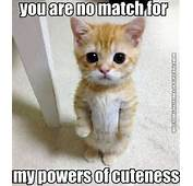 Funny Cat Picture You Are No Match For My Cuteness