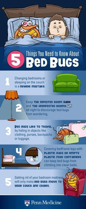 7 Things You Need To About Bedbugs by 5 Things You Need To About Bed Bugs Bed Bug