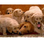 Dog Family  Dogs Wallpaper 13937053 Fanpop