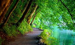 Free Nature Desktop Scenes