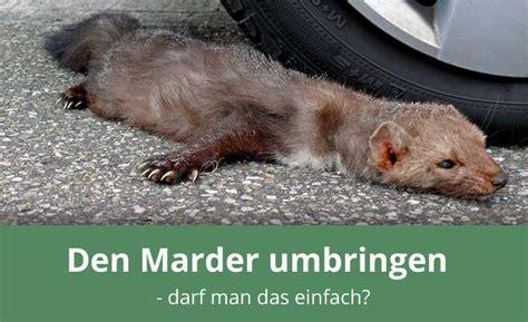 Wie Vertreibe Ich Einen Marder 1541 by Wie Vertreibt Marder Marder So Vertreibt Sie