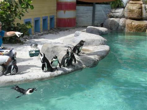 Penguin exhibit - Picture of ZooTampa at Lowry Park, Tampa ...