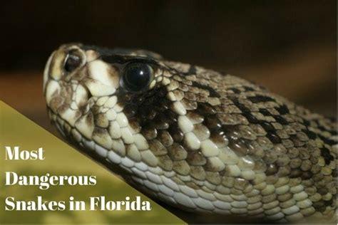 images florida garden snakes poisonous  view alqu blog
