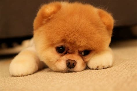 sad puppy day puppy