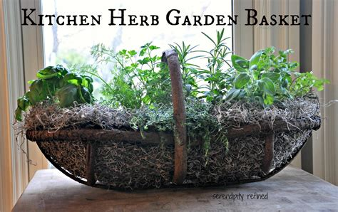 how to plant a container herb garden serendipity refined small space portable gardens