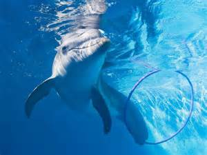 Resident is winter the dolphin photo clearwater marine aquarium