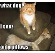 Funny Image Gallery Very Dog Pictures With Captions N
